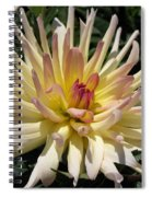 Dahlia Named Camano Ariel Spiral Notebook