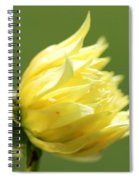 Dahlia Named Kelvin Floodlight Spiral Notebook