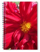 Dahlia Named Nuit D'ete Spiral Notebook