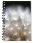 Dandelion Backlit Close Up Spiral Notebook