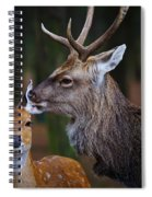 Deer Love Spiral Notebook