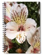 Desert Willow Spiral Notebook