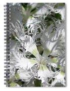 Dianthus Superbus - White Spiral Notebook