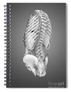 Digestive System And Bones Spiral Notebook