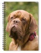 Dogue De Bordeaux Spiral Notebook
