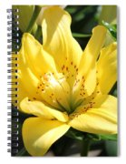 Double Asiatic Lily Named Fata Morgana Spiral Notebook