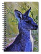 Eastern Grey Kangaroo Spiral Notebook