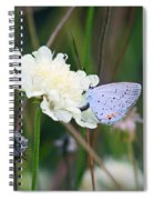 Eastern Tailed Blue Butterfly On Pincushion Flower Spiral Notebook
