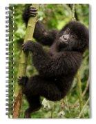 Endangered Mountain Gorillas Habitate Spiral Notebook