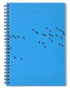 Eurasian Cranes Spiral Notebook