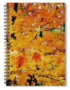 Fall Colors 2014-3 Spiral Notebook