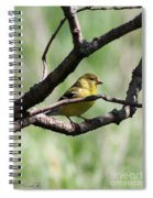 Female American Goldfinch Spiral Notebook