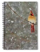 Female Cardinal In Snow Spiral Notebook