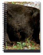 Florida Black Bear Spiral Notebook