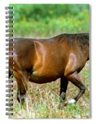 Florida Spanish Horse Spiral Notebook