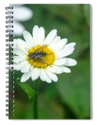 Fly On Daisy 3 Spiral Notebook
