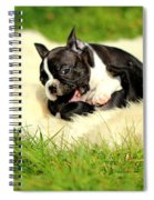 French Bulldoggs Spiral Notebook