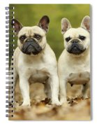 French Bulldogs Spiral Notebook