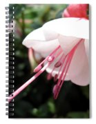 Fuchsia Named Liebelei Spiral Notebook