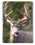 Funny Mule Deer Buck Portrait With Velvet Antler Spiral Notebook