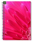 Gerbera Daisy Named Raspberry Picobello Spiral Notebook