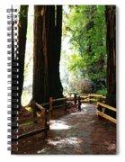 Giant Redwoods Spiral Notebook