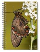 Gold Rim Swallowtail Butterfly Spiral Notebook