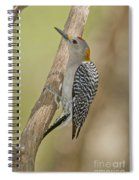 Golden-fronted Woodpecker Spiral Notebook