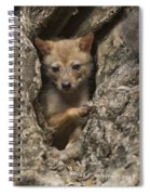 Golden Jackal Canis Aureus Cubs Spiral Notebook