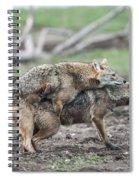 Golden Jackal Canis Aureus Spiral Notebook