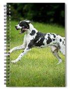 Great Dane Spiral Notebook