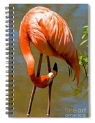 Greater Flamingo Spiral Notebook
