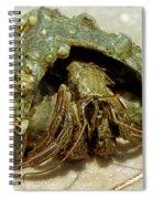 Green Striped Hermit Crab Spiral Notebook