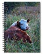 Herefords Spiral Notebook