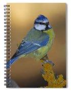 Herrerillo Blue Tit Spiral Notebook