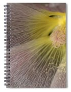 Hollyhock Named Indian Spring Pink Spiral Notebook