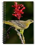 Hooded Oriole Juvenile Spiral Notebook