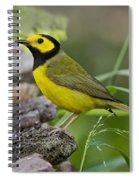 Hooded Warbler Spiral Notebook