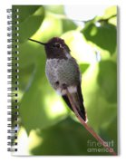 Hummingbird Hangout Spiral Notebook