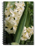 Hyacinth Named City Of Haarlem Spiral Notebook