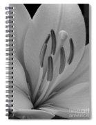 Hybrid Lily Named Trebbiano Spiral Notebook
