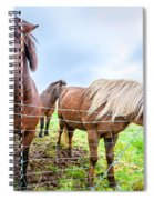 Icelandic Ponies Spiral Notebook
