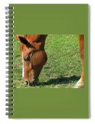 In Green Pasture Spiral Notebook