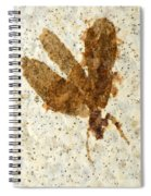 Insect Fossil Spiral Notebook