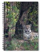 Jaguar Panthera Onca, Pantanal Spiral Notebook