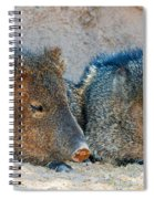 Javelina Spiral Notebook