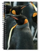 King Penguin Colony Spiral Notebook
