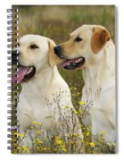 Labrador Retriever Dogs Spiral Notebook