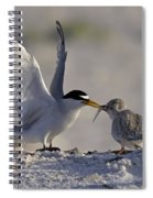 Least Tern Feeding It's Young Spiral Notebook