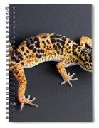 Leopard Gecko Eublepharis Macularius Spiral Notebook